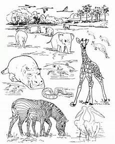 Bilder Zum Ausmalen Zoo Ausmalbilder Zoo Malvorlagen Ausdrucken 2