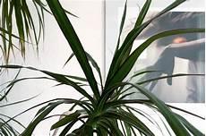orchideen sukkulenten palmen ein dschungel f 252 r zu hause