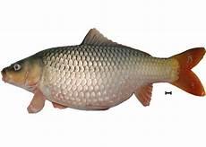 Gambar Ikan Png Klik Ok
