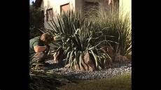 Taille D Un Yucca