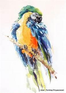 Malvorlagen Karneval Jakarta Die 334 Besten Bilder Zu Papagei Papagei Papagei