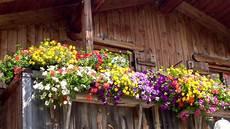 giardini di montagna balconi fioriti di montagna ambra garden design