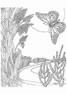 Ausmalbilder Natur Tiere Ausmalbild Schmetterling In Der Natur Zum Ausdrucken