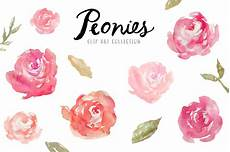 peony clipart watercolor peonies clip illustrations on creative market