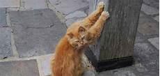 Mon Chat Urine Dans La Maison Ventana