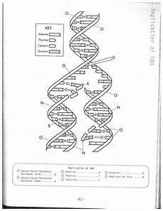 dna molecule and replication worksheet biology if8765 dna replication coloring worksheet dna coloring worksheet answer biology class