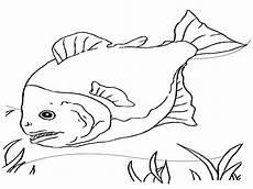 Ausmalbilder Erwachsene Fische Kostenlose Druckbare Fische Malvorlagen F 252 R Kinder