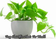 Feng Shui Office Plants 10 Plants For Wealth Office Plants