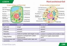 science worksheets for grade 7 igcse 12201 printables of year 7 biology worksheet geotwitter activities