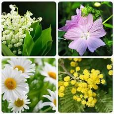 mughetto significato dei fiori significato dei fiori mamma felice