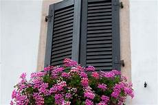 fiori per terrazzi al sole fratelli marinelli come arredare il balcone di casa