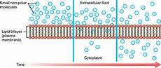 this figure shows the simple diffusion of small non polar molecules across the plasma membrane
