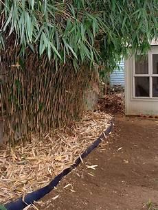 Barri 232 Re Anti Rhizome Pour Ma 238 Triser Le Bambou Et Les