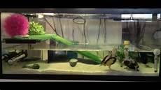 tortue eau douce aquarium amenagement aquaterrarium tortue d eau