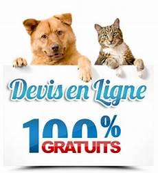 avis client self assurance animaux prendre soin de vos