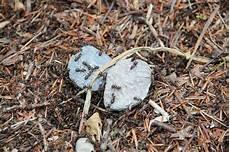 Was Tun Gegen Ameisen Auf Der Terrasse Backburner Grill