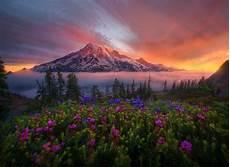 Flower Valley Wallpaper by Mountain Meadow Wallpaper Wallpapersafari