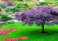 Jardin Zen Japonais Watosay Asanoclan Samura 207 Philosophy