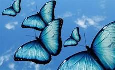 Weißer Schmetterling Bedeutung - wer schmetterlinge lachen h 246 rt der wei 223 wie wolken schmecken