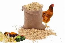 nourriture poules pondeuses rendement d un poulailler bio poulailler bio