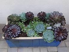 sukkulenten winterhart balkonkasten garden ideas succulents in window boxes tended