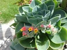 plante grasse joseph et ses plantes grasses