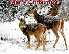 christmas card cards deer wildlife merry by songmountainfineart