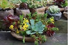 composizioni vasi succulent plant container space gardening space gardening