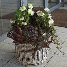 blumenkästen dekorieren winter zauberhafte christrose winter bepflanzungen f 252 r balkon