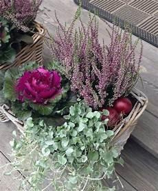 balkonpflanzen herbst winter herbst pflanzen blumenkasten heide zierkohl herbstblumen