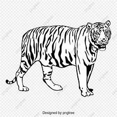 Hitam Dan Putih Harimau Seluruh Badan Seperti Bayang