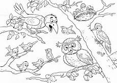 woodland animals coloring pages 17187 at the zoo woodland animals forest birds illustration for children coloring page stock