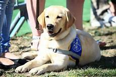 famille d accueil pour chien pendant les vacances la formation du chien guide d aveugle