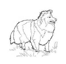 sheepdog coloring page free printable