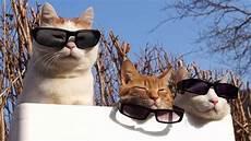 のせ猫 X サングラス3つ Cat Wear Glasses 2014 2