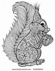 coloriage squirrel coloring page animal coloring pages