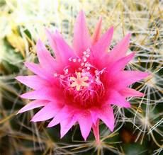 ca fiore fiori piante grasse 12mq pagina 6