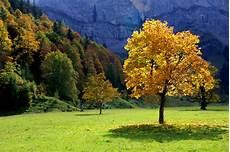 Herbst Malvorlagen Jakarta Hintergrundbilder B 228 Ume Landschaft Fallen Natur Gelb