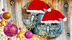 backyard birding and nature baby owls say humbug to chipmunks caroling quot we wish you a merry