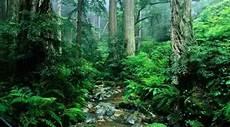 Hutan Di Sumbar Terancam Punah Seruji