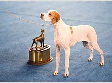 westminster dog show 2020 poodle