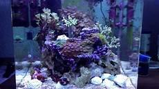 60 liter becken meerwasser nano becken 60 liter