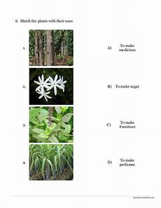 types of plants worksheets for grade 2 13744 environmental science evs plants worksheet class ii