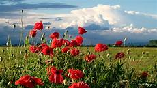 paesaggi fioriti sfondi paesaggio italia natura rosso papaveri co