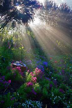 a light bright and beautiful soft warm rays of beaming through the trees