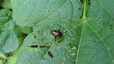 garden to garden identify a pest
