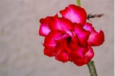 flower garden flowers 183 free photo on pixabay