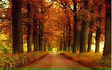 Home Screen Wallpapers Autumn