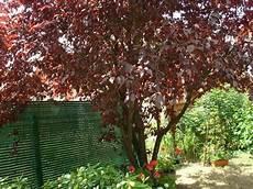 arbre a pousse rapide quel arbre 224 croissance rapide me conseillez vous r 233 solu