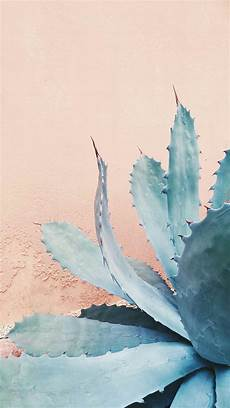 aesthetic cactus iphone wallpaper coral white botanical floral iphone wallpaper background